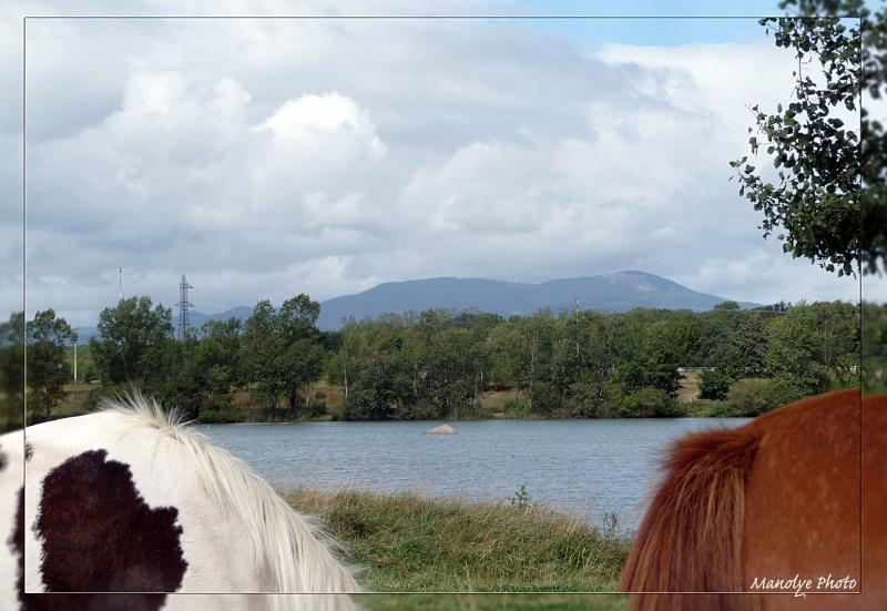 Fil sur les équidés (chevaux, ânes, mules) - Page 4 P1090517