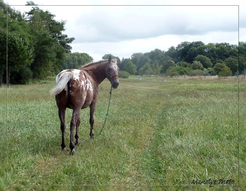 Fil sur les équidés (chevaux, ânes, mules) - Page 4 P1090518