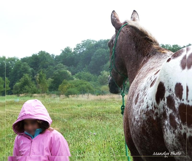 Fil sur les équidés (chevaux, ânes, mules) - Page 4 P1090520