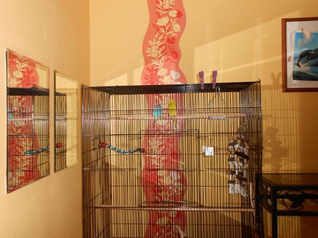 Nouvelle cage Dscn0110