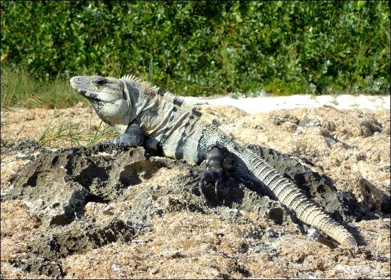 [Fil ouvert à tous] Reptiles, serpents, tortues, amphibiens, ... - Page 6 2111
