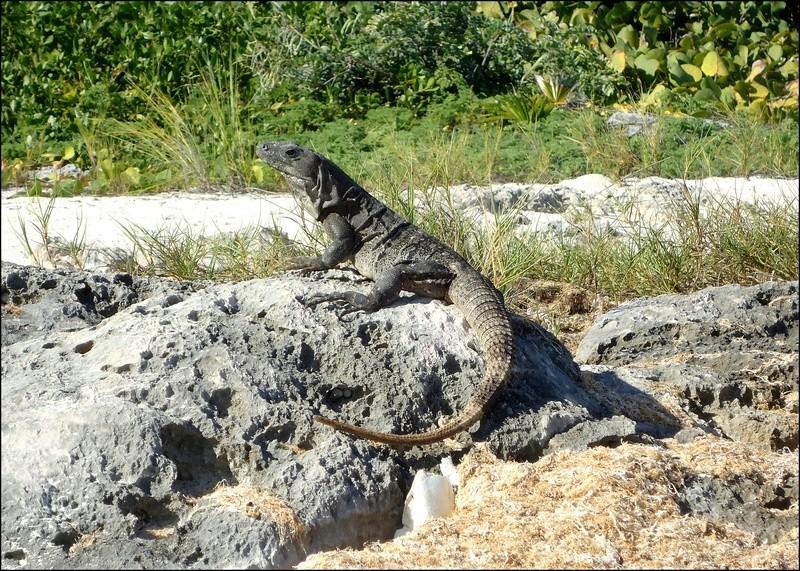 [Fil ouvert à tous] Reptiles, serpents, tortues, amphibiens, ... - Page 6 2210