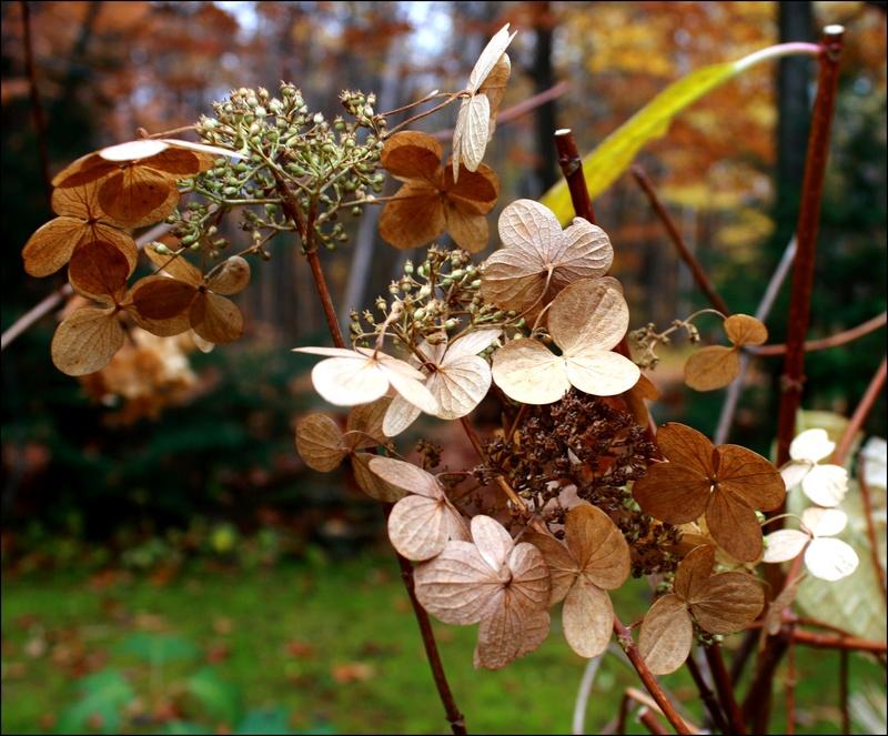 [Fil Ouvert] Fleurs - Page 30 Les_fe10