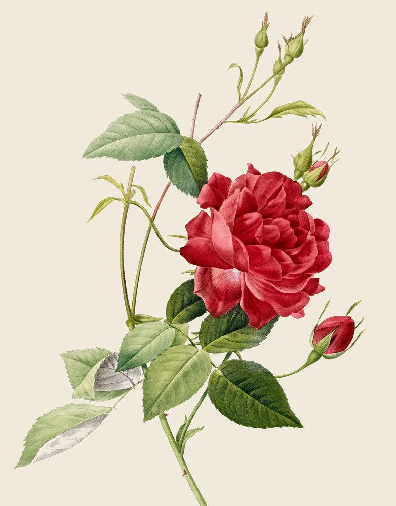 Le doux parfum des roses - Page 5 G7006310