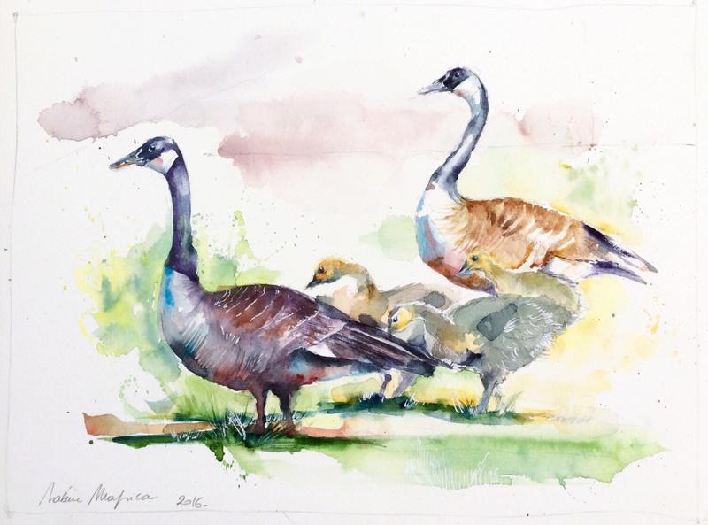 Les animaux peints à l'AQUARELLE - Page 3 Il_ful39