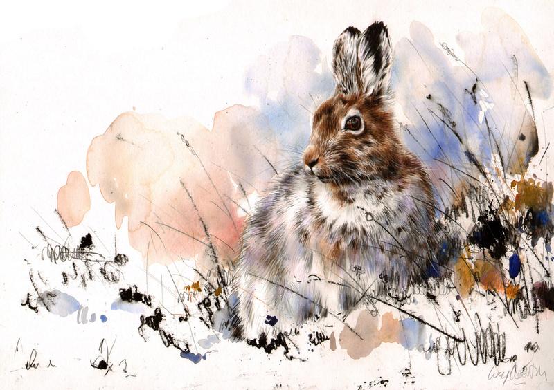 Les animaux peints à l'AQUARELLE Lucy_n11