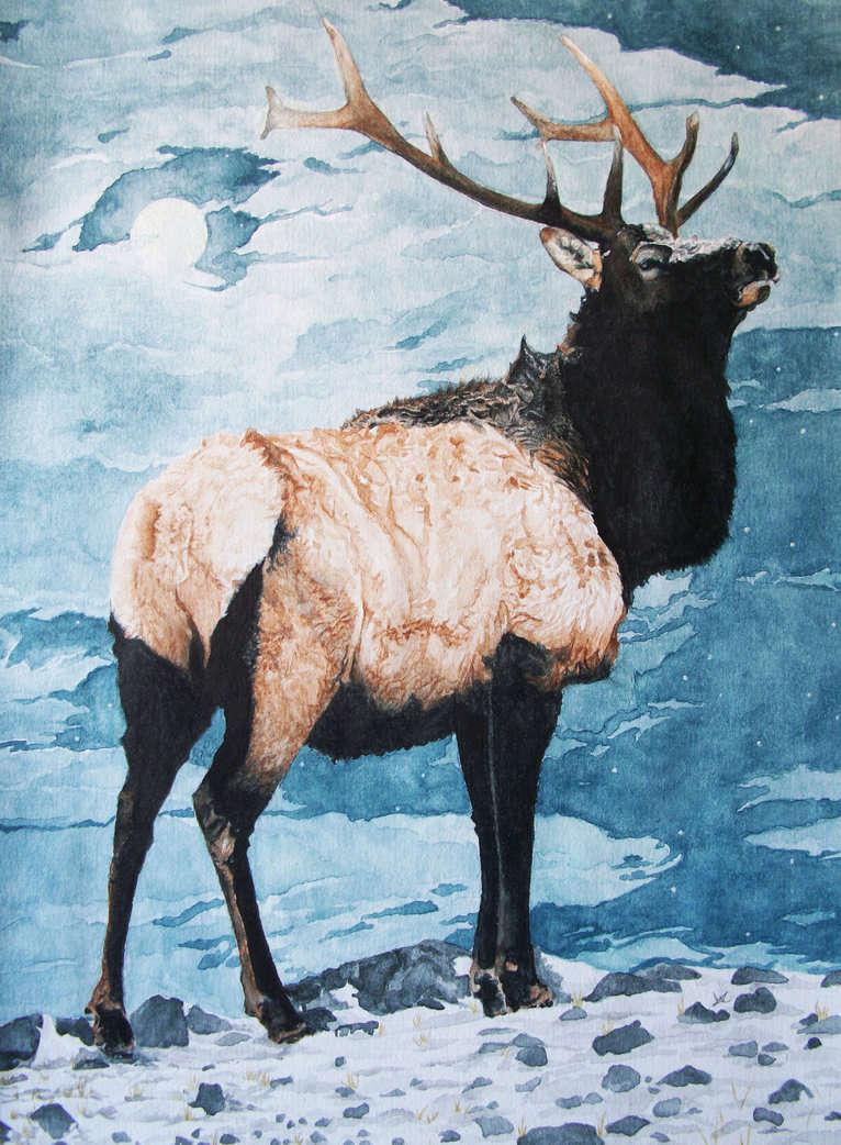 Les animaux peints à l'AQUARELLE - Page 2 Old_ki10