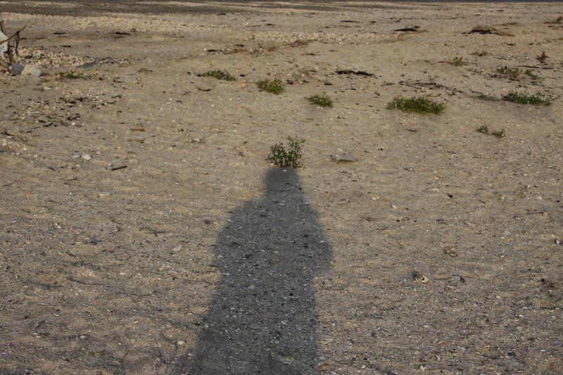 Je ne suis que l'ombre de moi-même !! - Page 7 Ombre_10