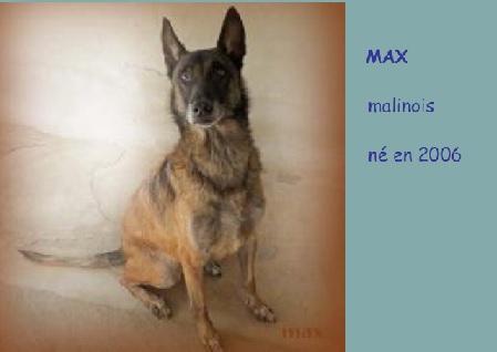 MAXx - malinois 13 ans   (3 ans de refge) - Refuge les amis des Betes  Refuge de Reims à Ormes (51) Max10