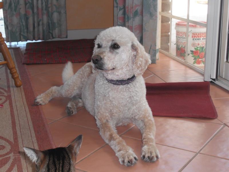 Pluto's dog Parlour Pets_010