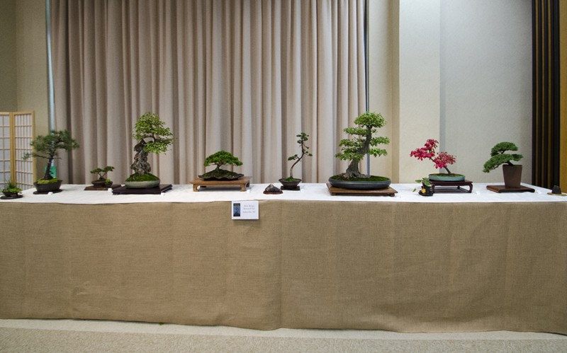 Some wide angle shots of Carolina Bonsai Expo showing the full displays Small_11