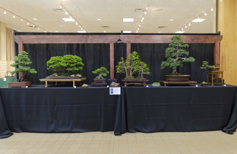Some wide angle shots of Carolina Bonsai Expo showing the full displays Small_12