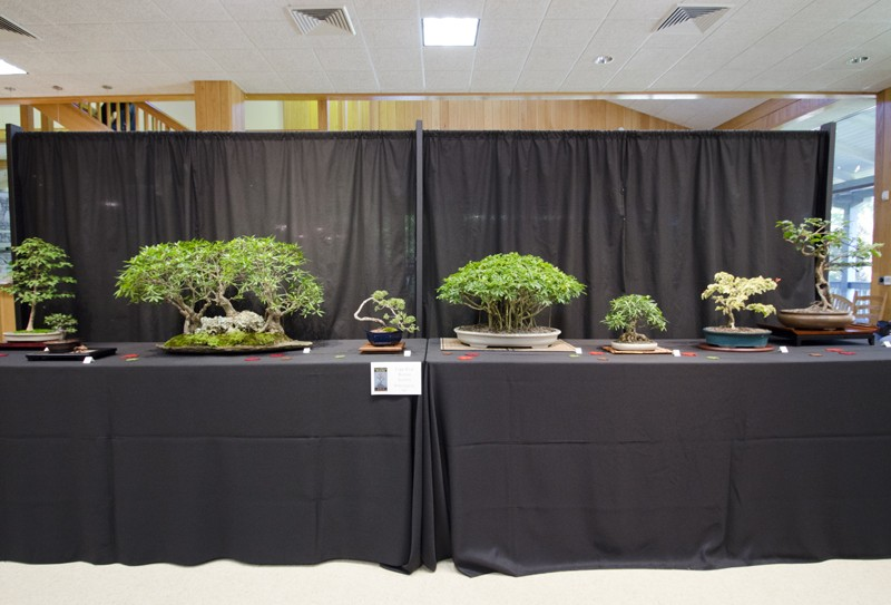 Some wide angle shots of Carolina Bonsai Expo showing the full displays Small_13