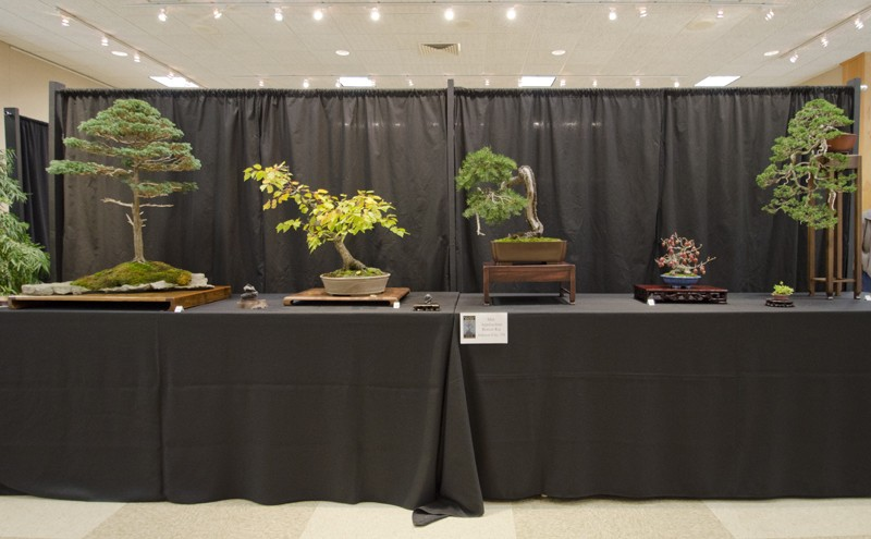 Some wide angle shots of Carolina Bonsai Expo showing the full displays Small_16