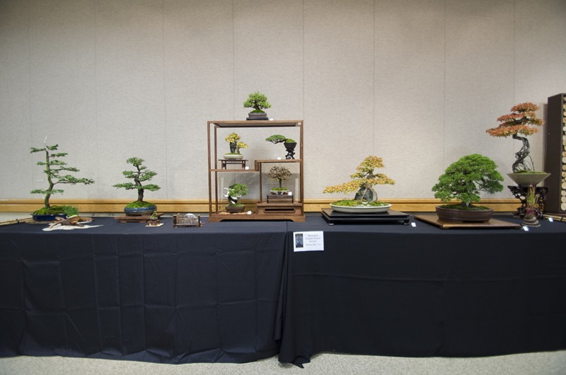 Some wide angle shots of Carolina Bonsai Expo showing the full displays Small_17