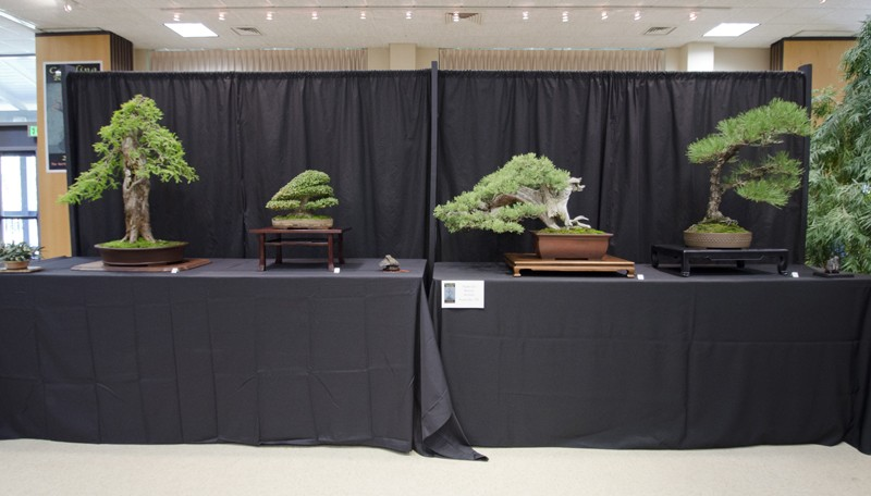 Some wide angle shots of Carolina Bonsai Expo showing the full displays Small_18
