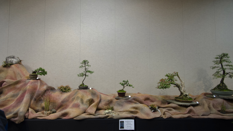 Some wide angle shots of Carolina Bonsai Expo showing the full displays Small_19
