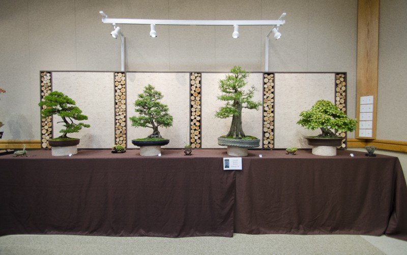 Some wide angle shots of Carolina Bonsai Expo showing the full displays Small_20