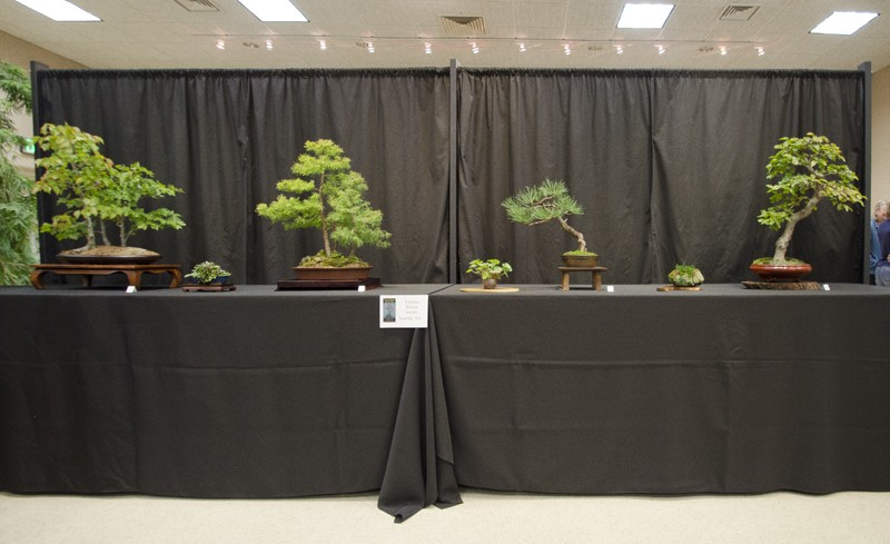 Some wide angle shots of Carolina Bonsai Expo showing the full displays Small_21