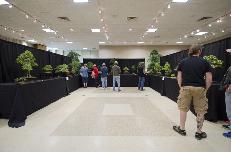 Some wide angle shots of Carolina Bonsai Expo showing the full displays Small_22