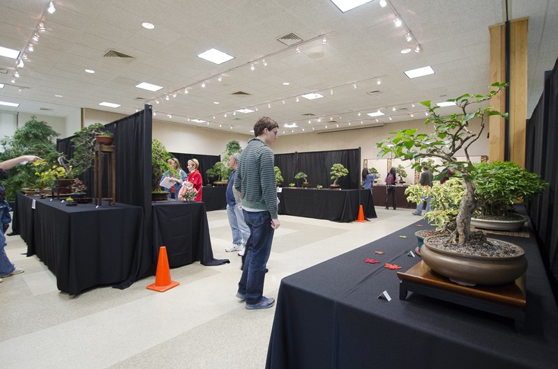 Some wide angle shots of Carolina Bonsai Expo showing the full displays Small_25