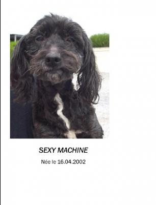 URGENCE pour SEXY MACHINE, adorable Canichette OK TOUT de 10 ans ! (59) Sexyma10