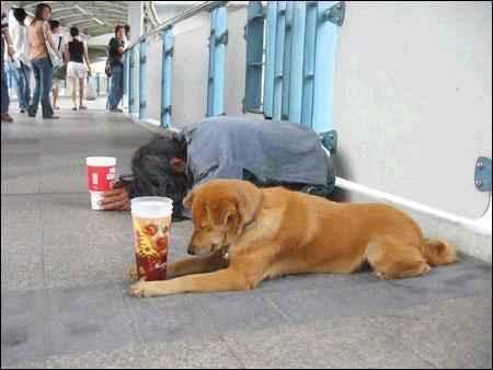 Anjing pengemis Pengem10