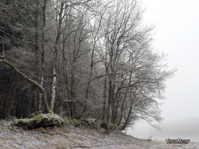 Brouillard givrant sur le Merle Brouil12