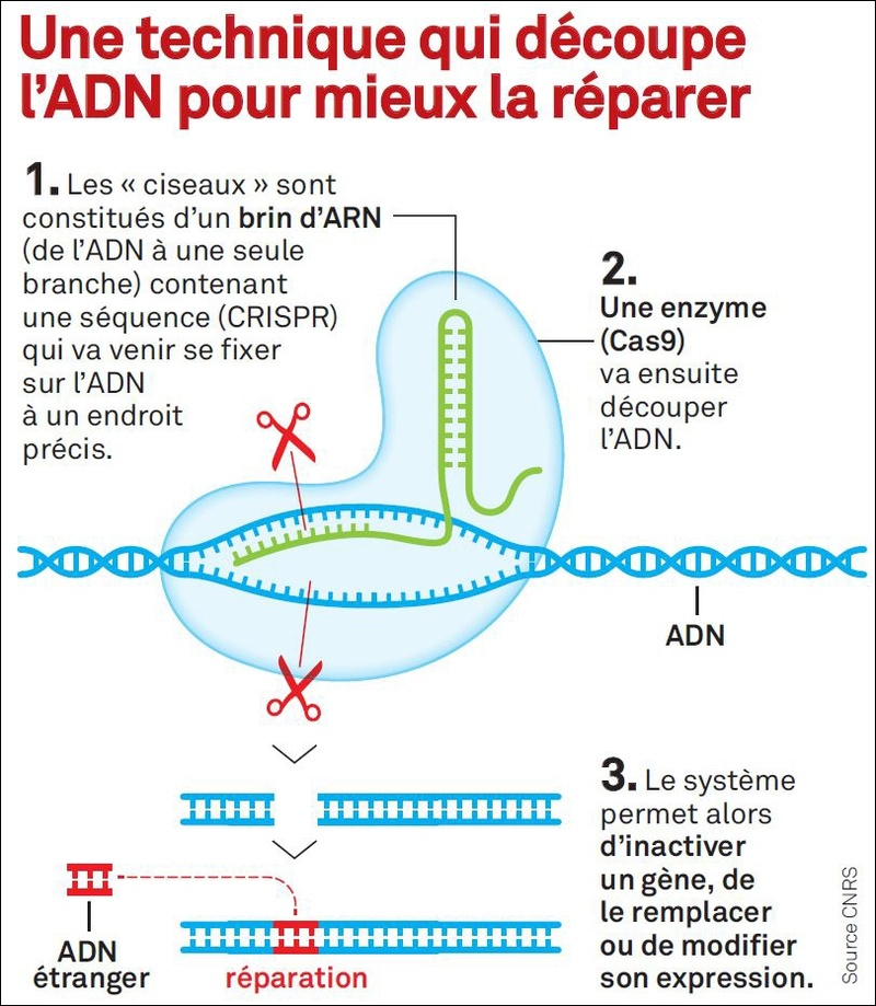 Bio-hackers : les bricoleurs d'ADN  11716210