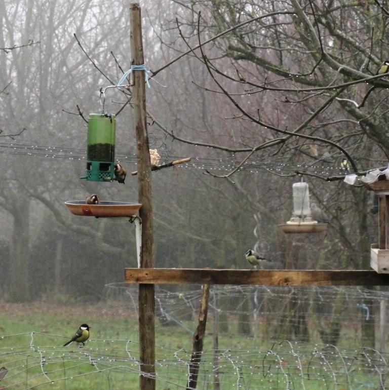 Un petit oiseau perdu dans la froideur.. Dsc09610