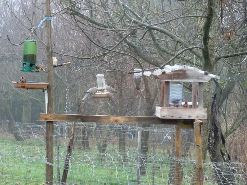 Un petit oiseau perdu dans la froideur.. Dsc09611