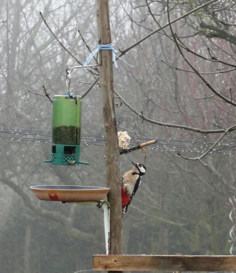 Un petit oiseau perdu dans la froideur.. Dsc09710