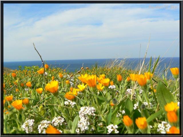 photos faune et flore  P1220011
