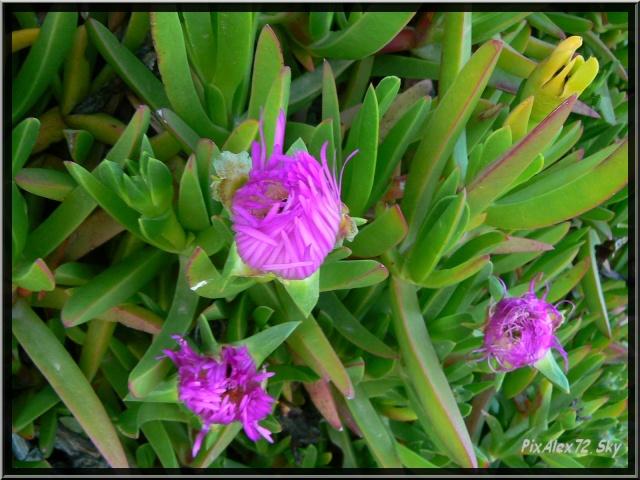 photos faune et flore  P1220111