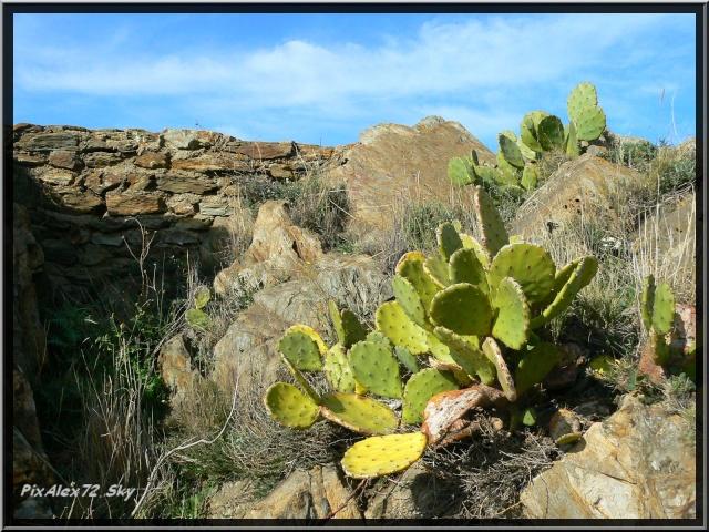 photos faune et flore  P1220112
