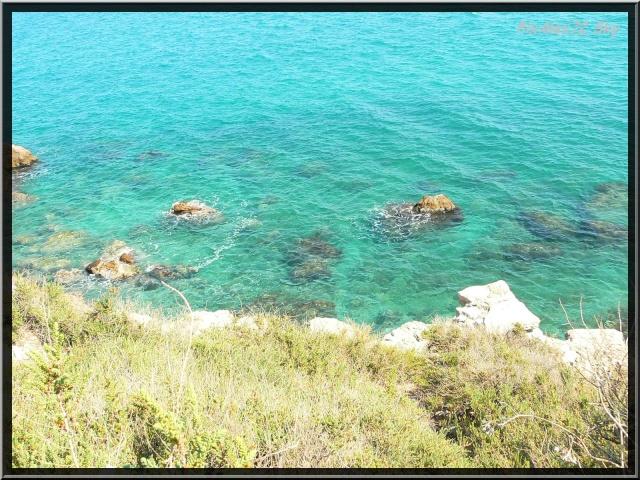 photos faune et flore  P1220115