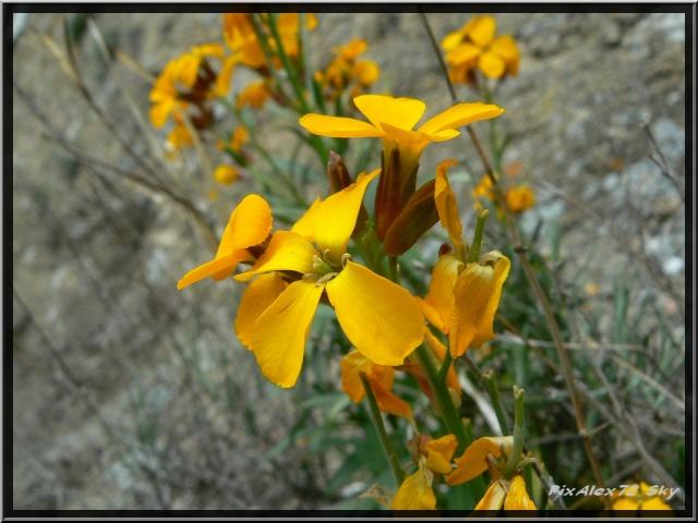 photos faune et flore  P1220312