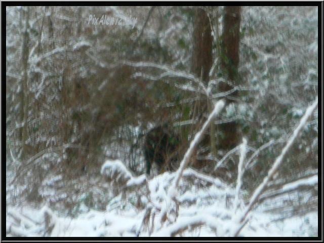 photos faune et flore  P1240411