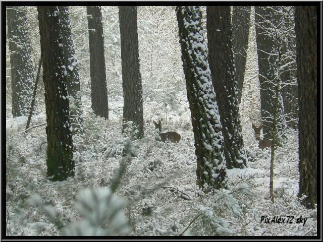 photos faune et flore  P1240413