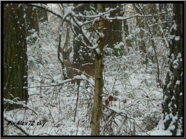 photos faune et flore  P1240414