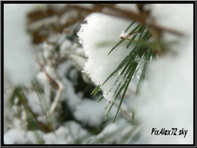 photos faune et flore  P1240417
