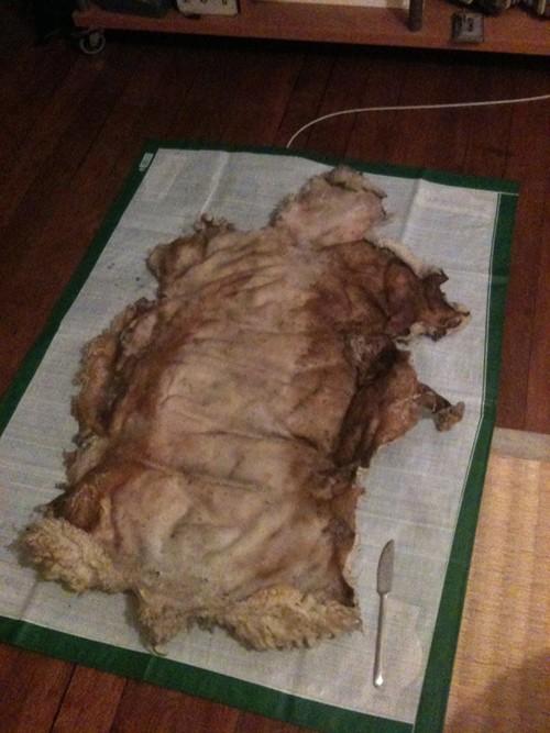 Tannage peau de mouton Peau13