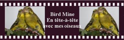 Quelques oiselleries Belges - Page 2 Ban111