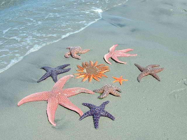 The Starfish Story Starfi13