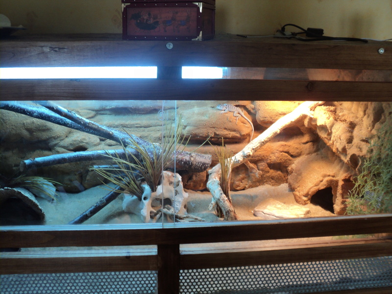 Construction  d'un terrarium pour mon gecko 001_210