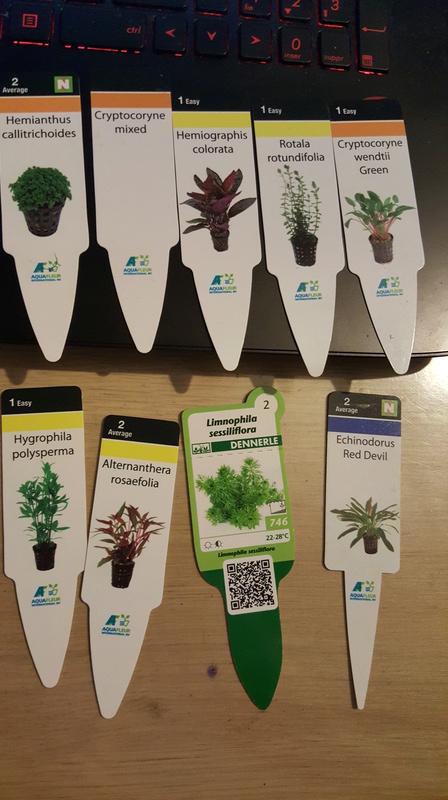 gravier,plantes, roche sales 20170117