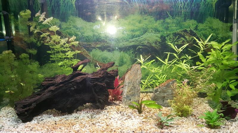 gravier,plantes, roche sales Aqua10