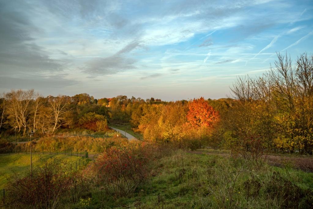 L'automne au parc de la glissoire a Avion ( pas de calais ) Imgp8810