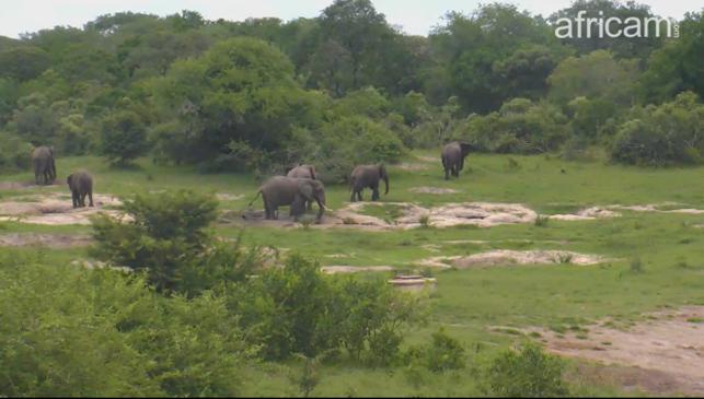 Les parcs en webcam live  Image218