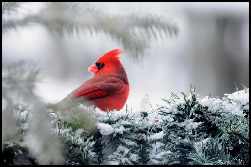 Cardinal ! Seb_2210